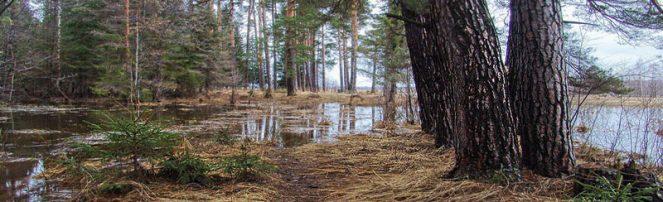 На реках Приморского края отмечается как подъем, так и спад уровня воды.