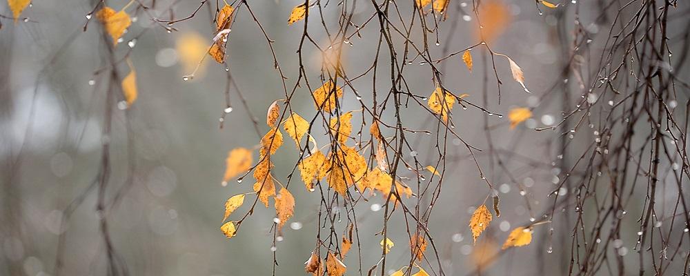 3 декабря в Приморье пройдет дождь, переходящий местами в снег