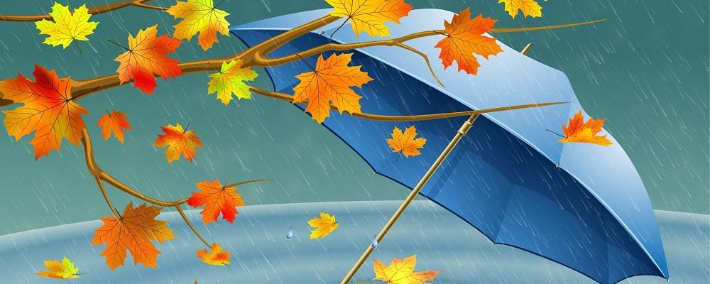 В среду 10 октября в Приморье пройдут дожди, усилится ветер и похолодает