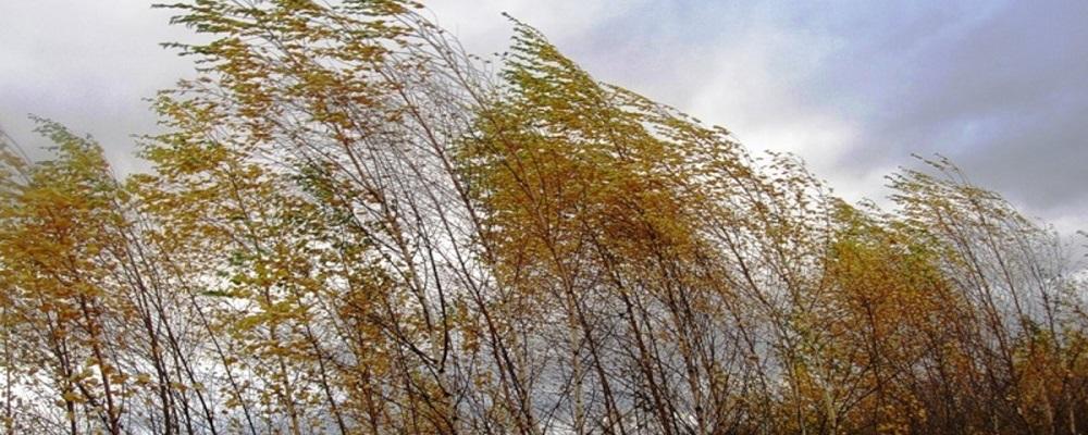 Похолодание и ветер