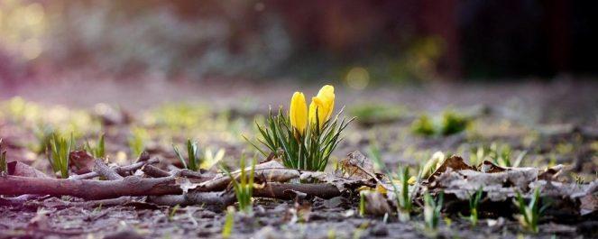 В крае потеплеет, но не везде. В четверг пройдет кратковременный дождь