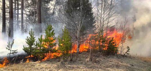 Пожароопасная обстановка сохраняется в Приморском крае