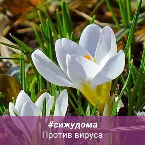 Рисунок профиля (Алена Викторовна)